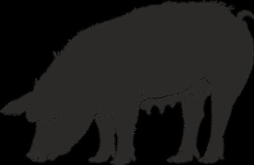 [夢占い]豚の夢が示す2つの両極端な象徴とは?