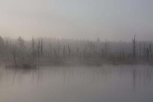 [夢占い]沼の夢が持つ意味とは?アナタの精神状態がわかる?